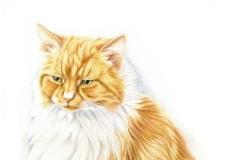 Jasper - Commande