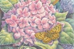 Hortensias et papillon - 20 x 30 cm Dispo