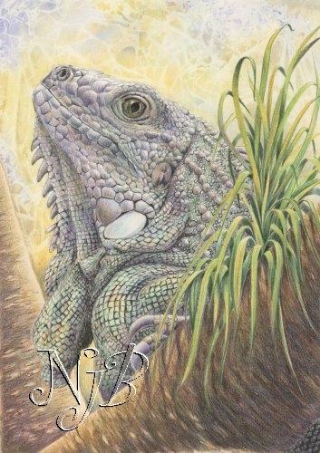 L'iguane - 20 x 30 cm