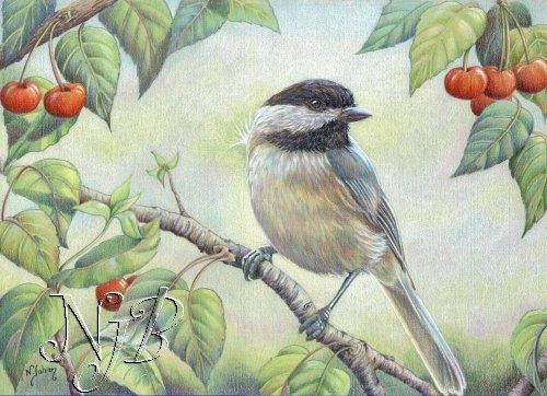 Mésange aux cerises - 25 x 35 cm