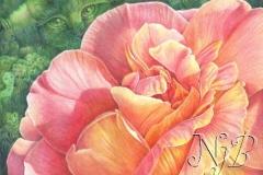 Esprit de la rose - 30 x 40 cm