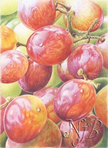 Raisins - 20 x 30 cm