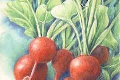 Les radis - 20 x 30cm