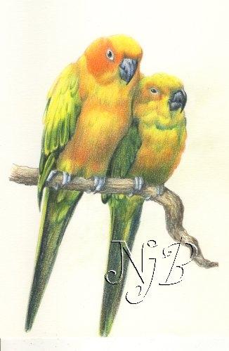 Perruches Crayons de couleur - 30 x 20 cm - dispo