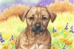 Pitichien - commande Crayons de couleur - 35 x 25 cm - vendu