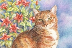 Horus la chat roux - Crayons de couleurs 20 cm x 30 cm