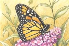 Papillon - Dessin 30 x20 cm