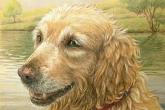 Portrait de Reda, Dessin 40 x 30 cm