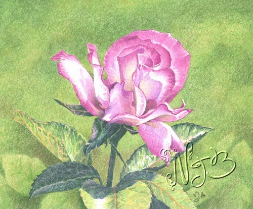 Et rose elle a vécu ... - 20 x 30 cm