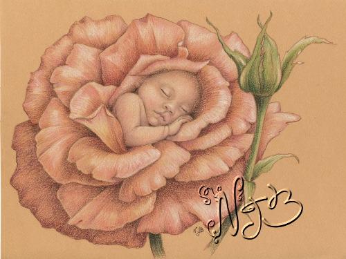 Né dans une rose - Dessin 20 x 30cm