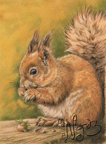 L'écureuil - Dessin 20 x 30cm
