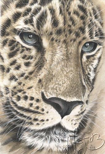 Le léopard - Dessin 20 x 30cm