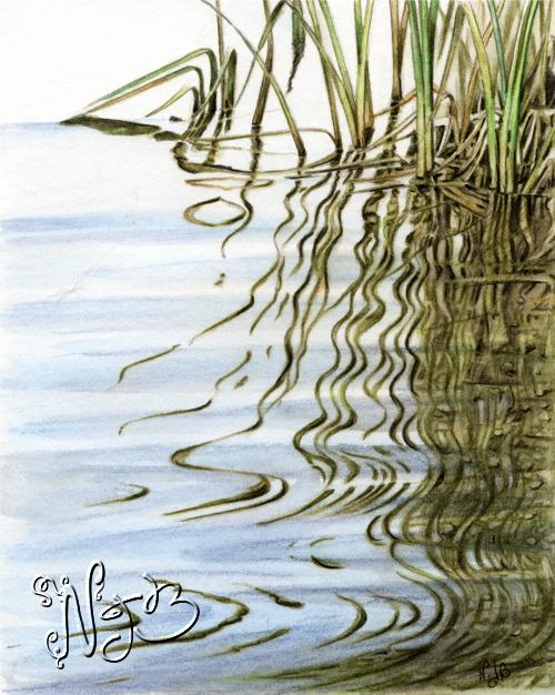 Les roseaux - Dessin 20 x 30cm