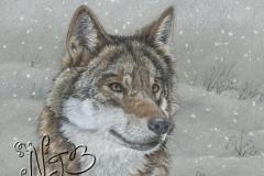 Le loup - Dessin 20 x 30cm