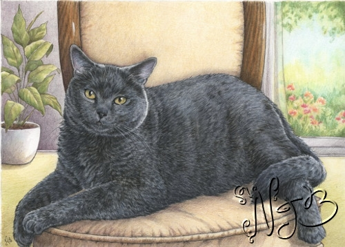 Chartreux - Portrait sur commande