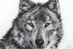 Loup - Vendu