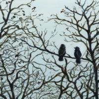 Le couple de choucas Acrylique sur médium 15 x 15 cm