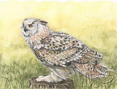 Owl portrait