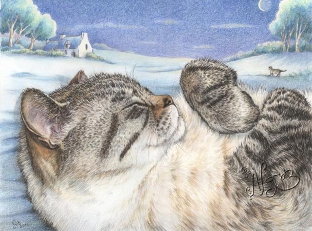 Pussy cat portrait