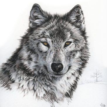 Un loup … premier de la série Animaux totems