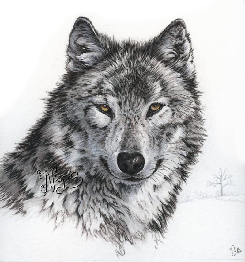 Carte postale le loup peintures et dessins - Dessiner une tete de loup ...