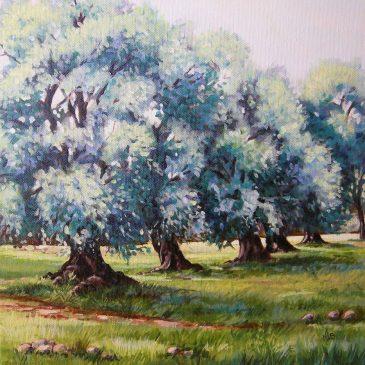 Les oliviers bleus … retour de Corse